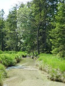 Natur Weissenbach