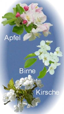 Apfel Birne Kirsche